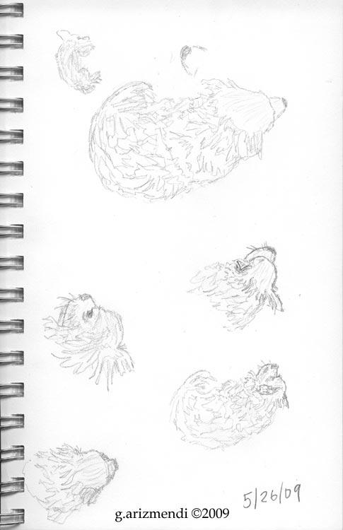 longhair_chihuahua_sketch